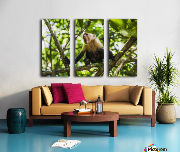 Monkey yawning in jungle Split Canvas print