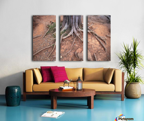 Gettysburg Tree Roots Split Canvas print