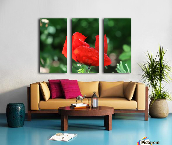 Red poppy Split Canvas print