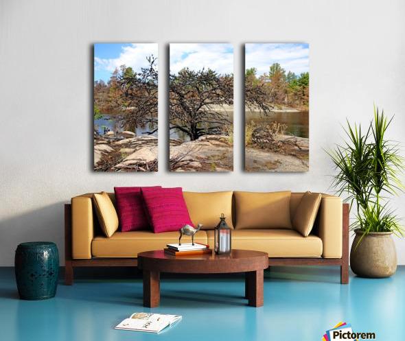 The Pine Tree I Split Canvas print