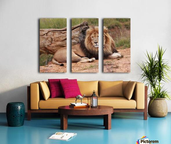Brown Lion Male 9027 Split Canvas print