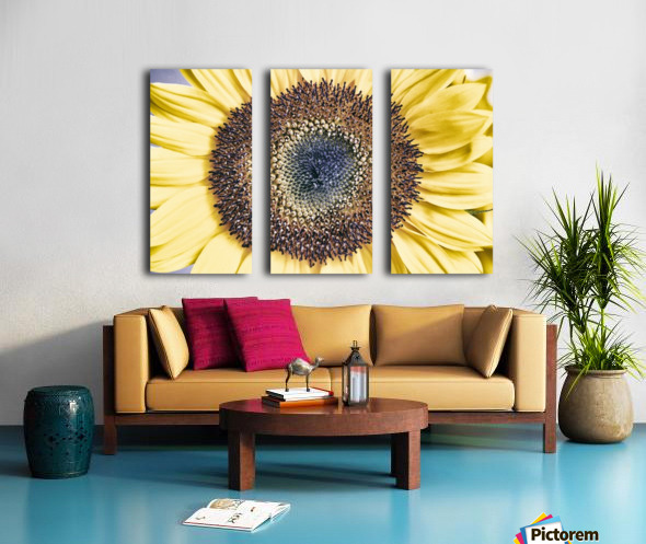 Sunflower Close Up Split Canvas print