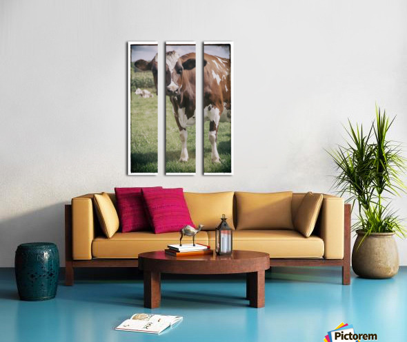 Brown Cow Split Canvas print