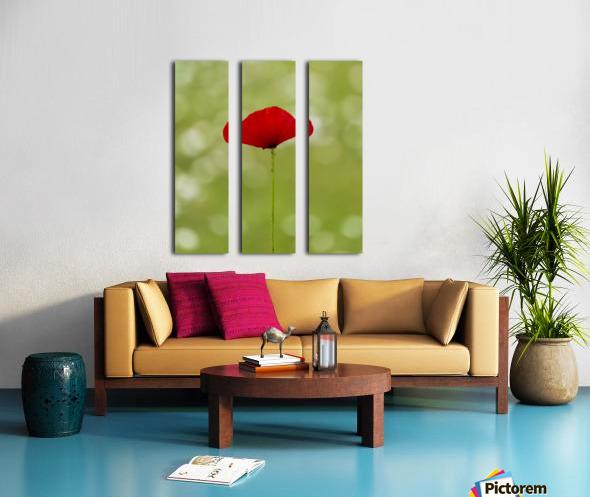 A solo Red Poppy Split Canvas print