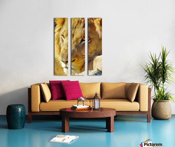 Lion Male Split Canvas print