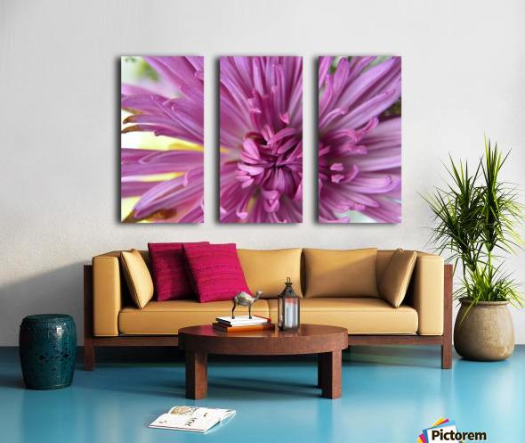 Fuscia-Colored Aster Split Canvas print