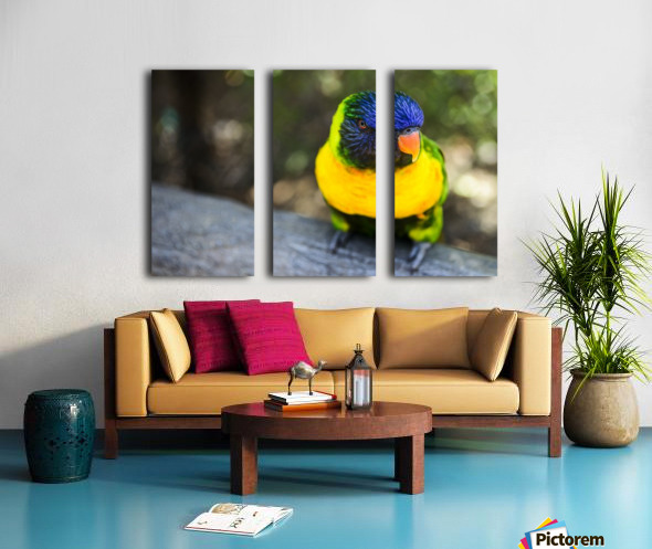 Parrot Split Canvas print