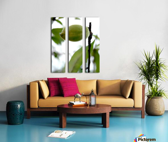The Plum Split Canvas print