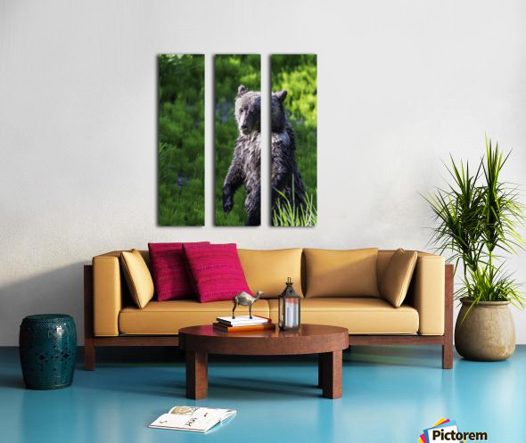 A grizzly cub named Pepper Split Canvas print