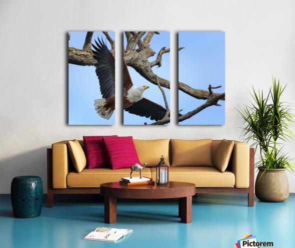african fish eagle Split Canvas print
