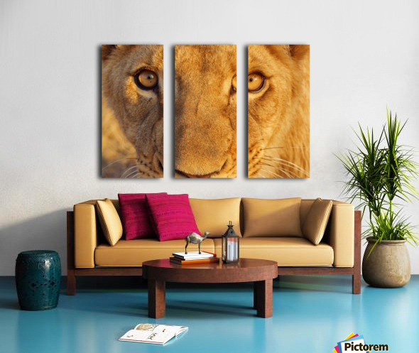 Lion Eyes  Split Canvas print