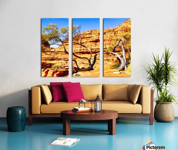 Twisted Tree - Kings Canyon Split Canvas print
