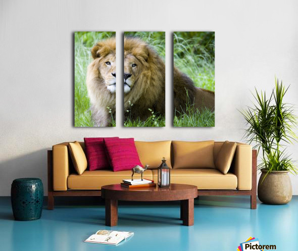 Simba Split Canvas print