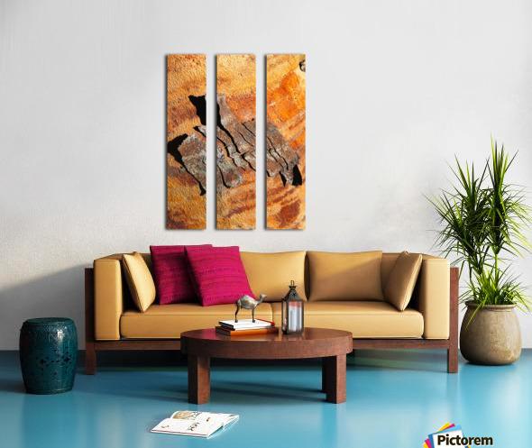 Flowering Gum Bark Split Canvas print