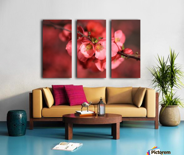 Flowering Quince Of Spring Split Canvas print