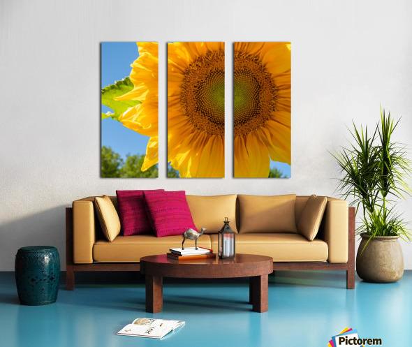 Sunflower 10 Split Canvas print