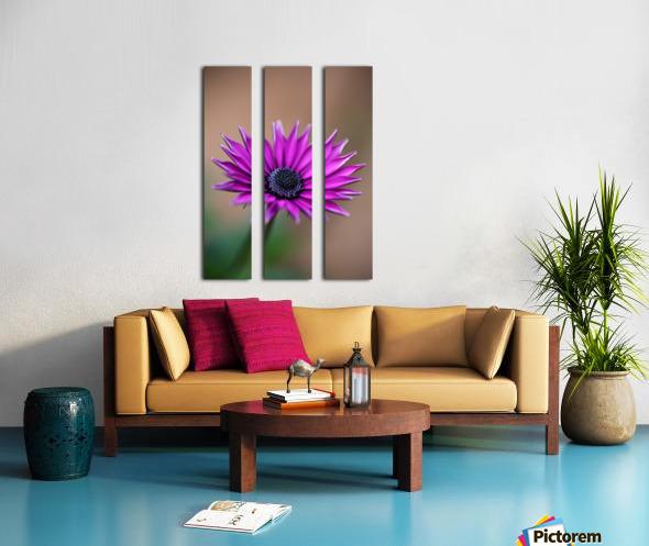 Purple Daisy Split Canvas print
