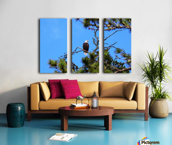 Bald Eagle Looking Regal Split Canvas print