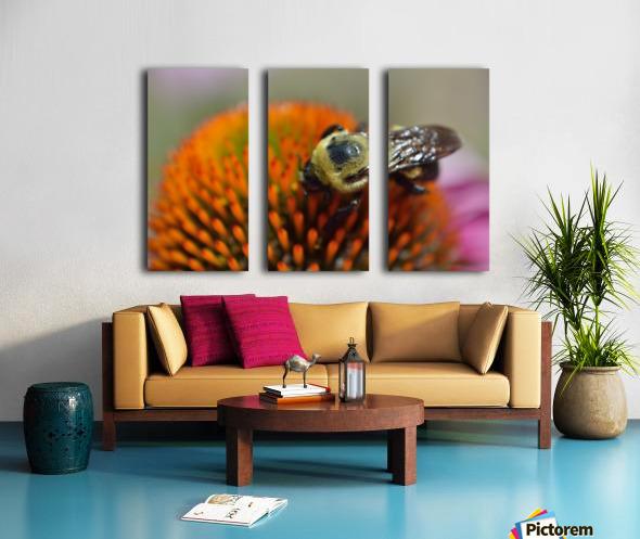 Purple Coneflower with bee Split Canvas print