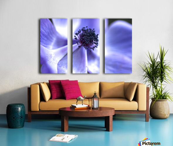 Blue Anemone Split Canvas print