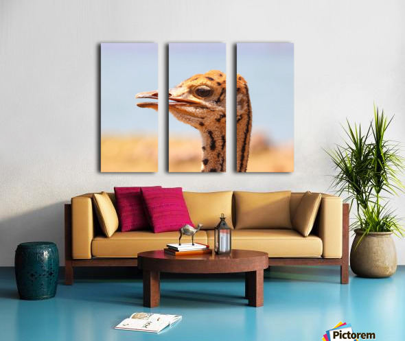 Baby Ostrich 5378 Split Canvas print