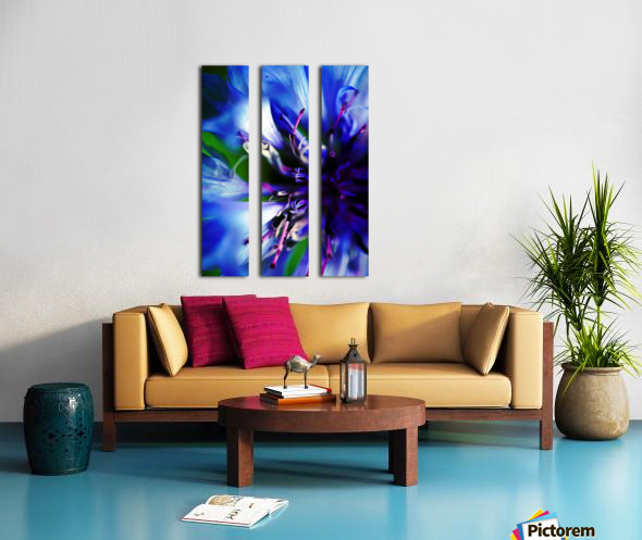 Abstract Pop Color Flower Photography 21 Split Canvas print