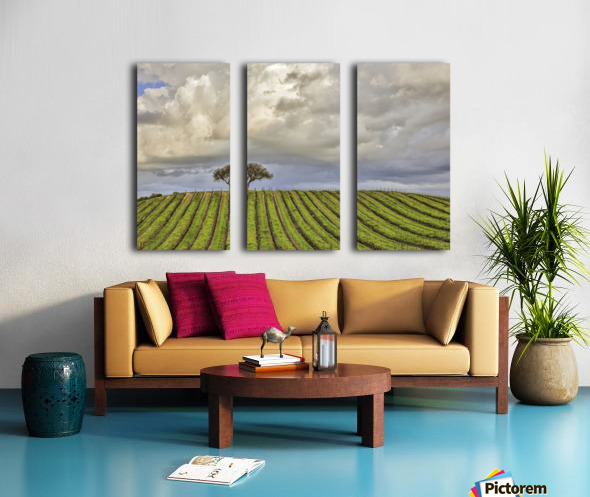 alone among the vines Split Canvas print