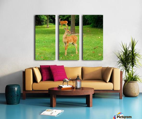 20190909_153647 Split Canvas print