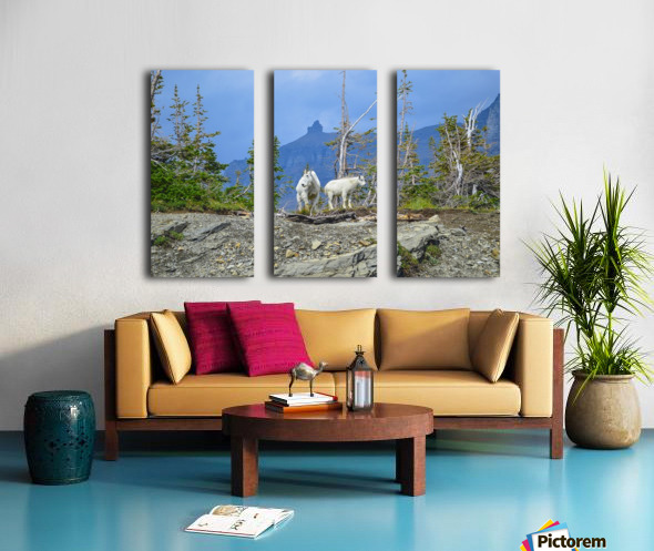 Mountain Goats at Logan Pass Split Canvas print