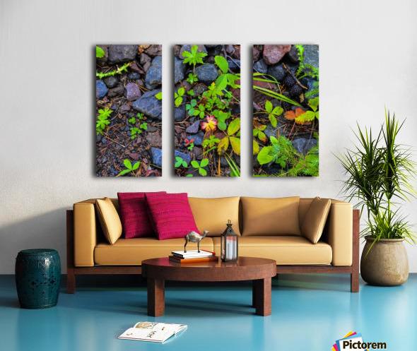 Forest floor Split Canvas print