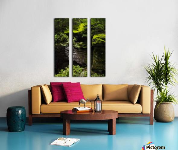 Trail of the Cedars Split Canvas print