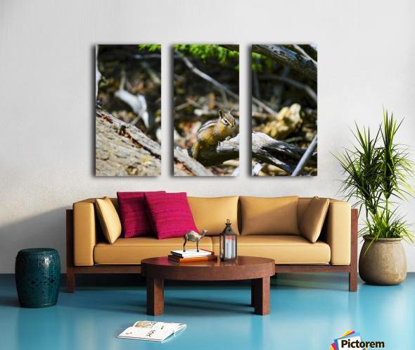 Chipmunk Split Canvas print
