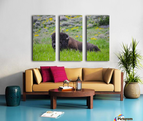Bison in Wildflowers Split Canvas print