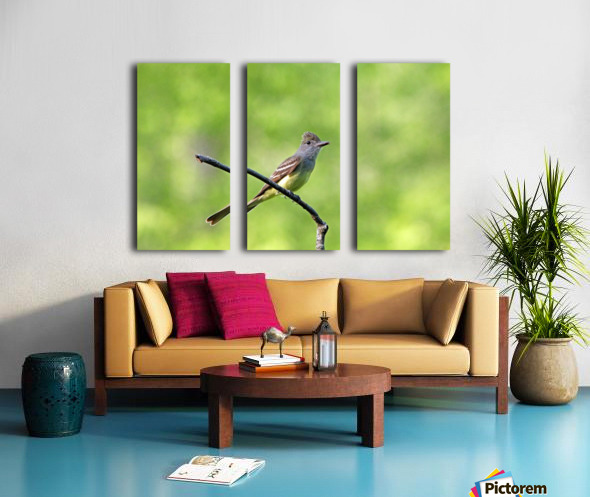 Great Crested Flycatcher With Snack Split Canvas print