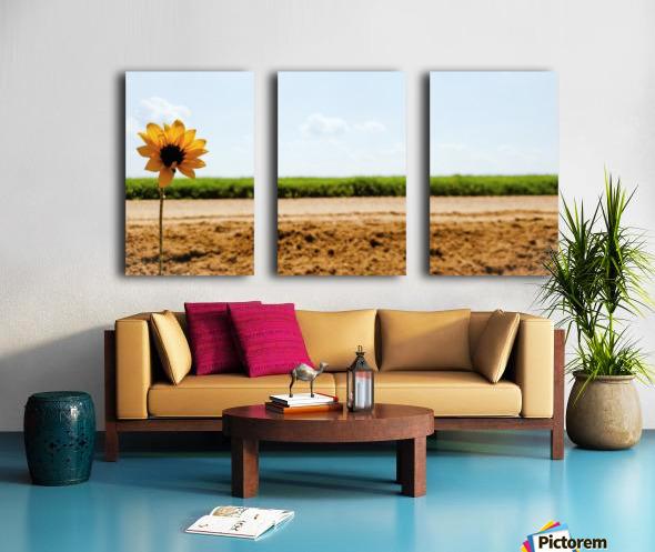 IMG_20180712_114734_227 Split Canvas print