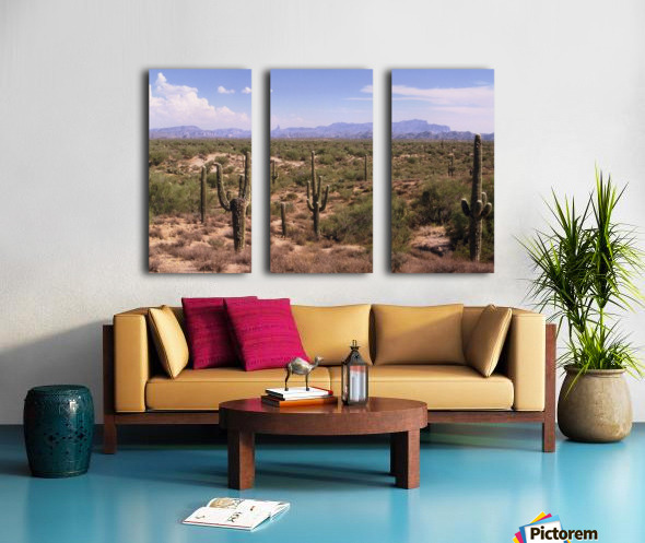 Sonora Desert Landscape Arizona Photograph Split Canvas print