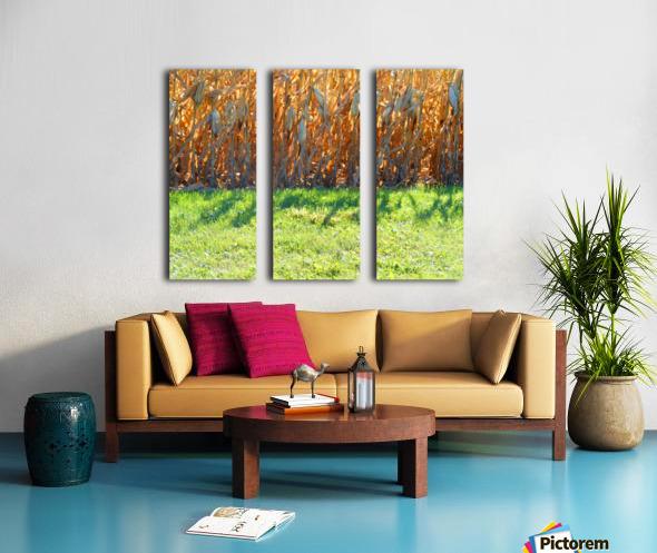 Cornstalk Shadows Split Canvas print
