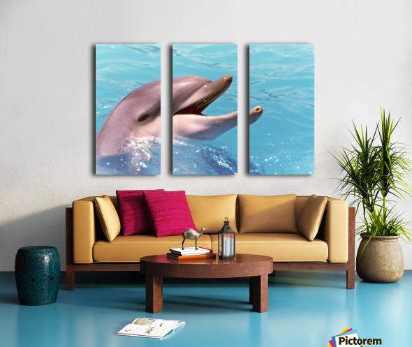 Happy Dolphin Photograph Split Canvas print