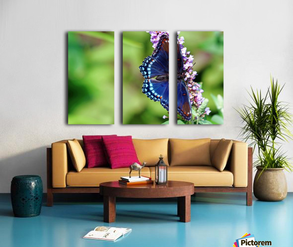 Red Spotted Purple Beauty Split Canvas print