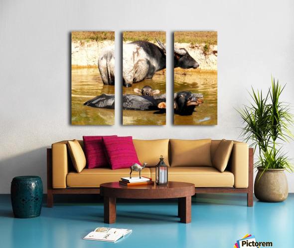 Water Buffalo Family Portrait Split Canvas print