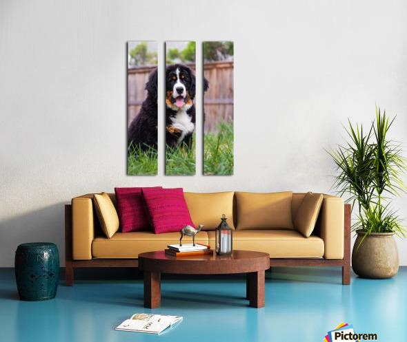 Bernese Mountain Dog Puppy 1 Split Canvas print