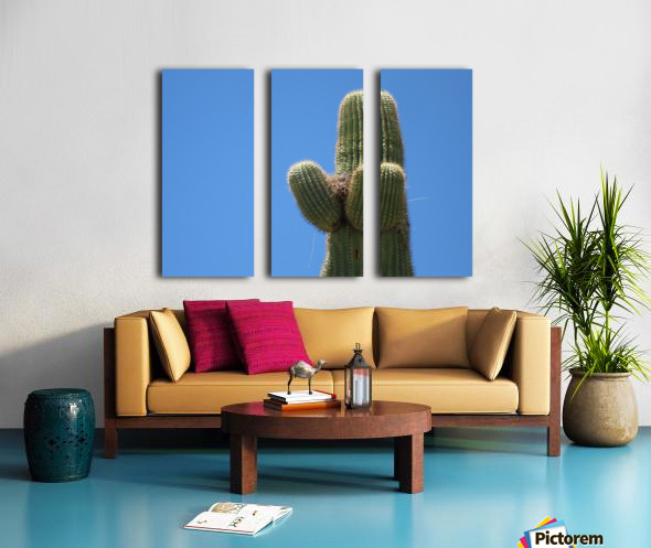 Saguaro Cactus Cradling A Birds Nest Photography Split Canvas print