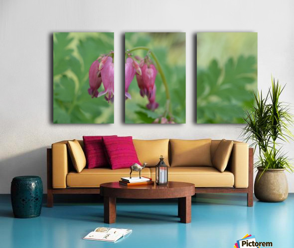 Bleeding Heart Flower Photography Split Canvas print