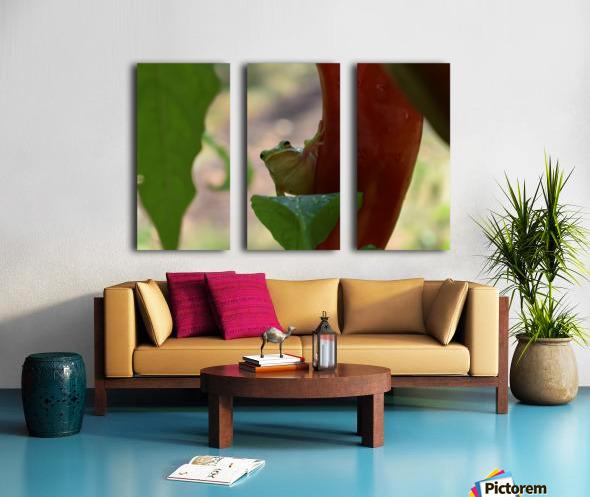 Peeping Frog Split Canvas print
