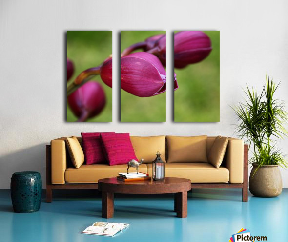 Rich Pink Orchid Buds Split Canvas print