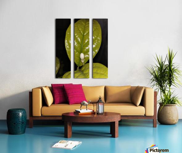 Jasmine Flower Fragrance Split Canvas print