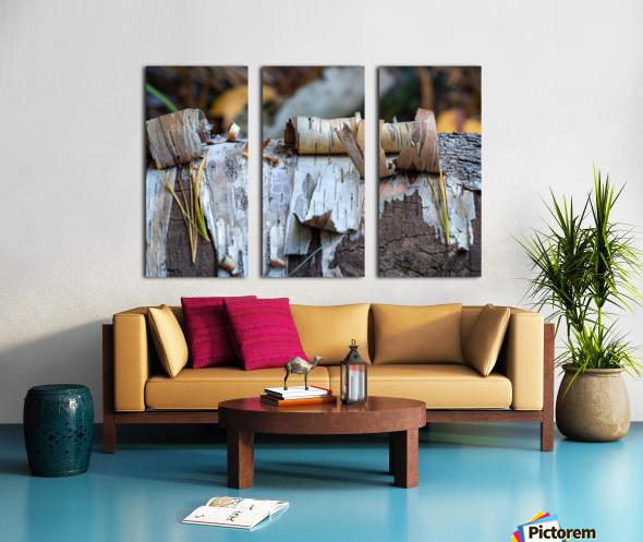 Fallen Birch Split Canvas print