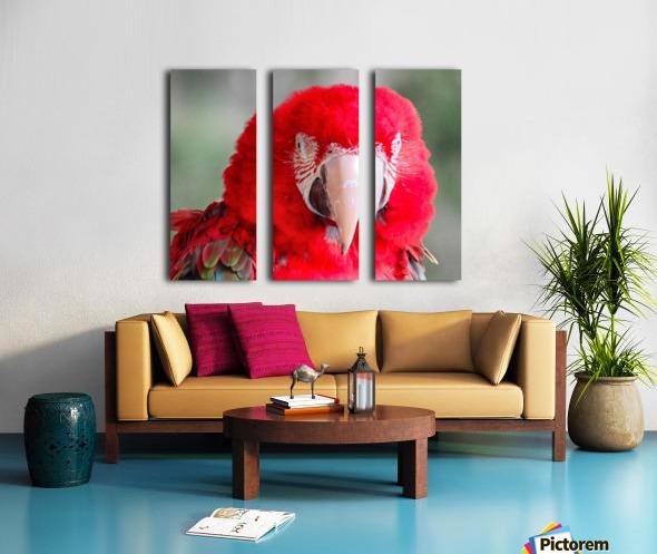 Red Parrot  Split Canvas print