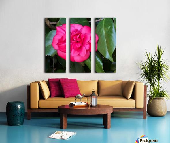 Japanese Camellia Split Canvas print