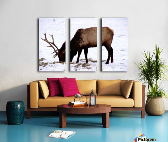 Elk in Wyoming Split Canvas print